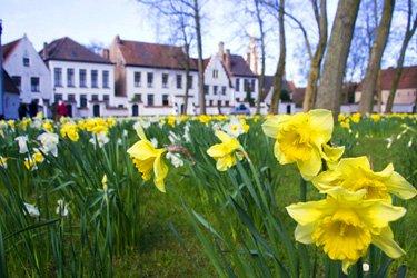 Il Begijnhof di Bruges