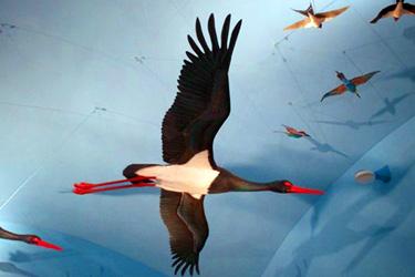 Il Museo della Migrazione e Osservatorio Ornitologico di Ventotene