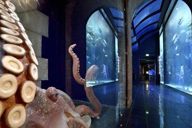 Il Museo Oceanografico di Monte Carlo