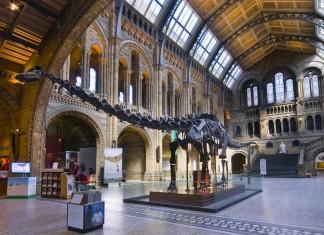 Il Museo di Storia Naturale a Londra