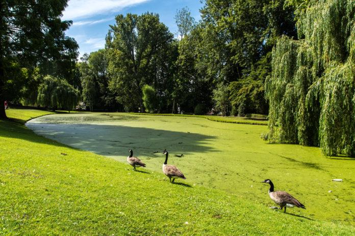 Parchi, giardini e zone verdi di Bruxelles
