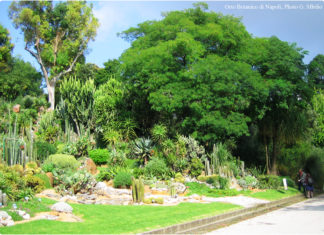 L'Orto Botanico di Napoli