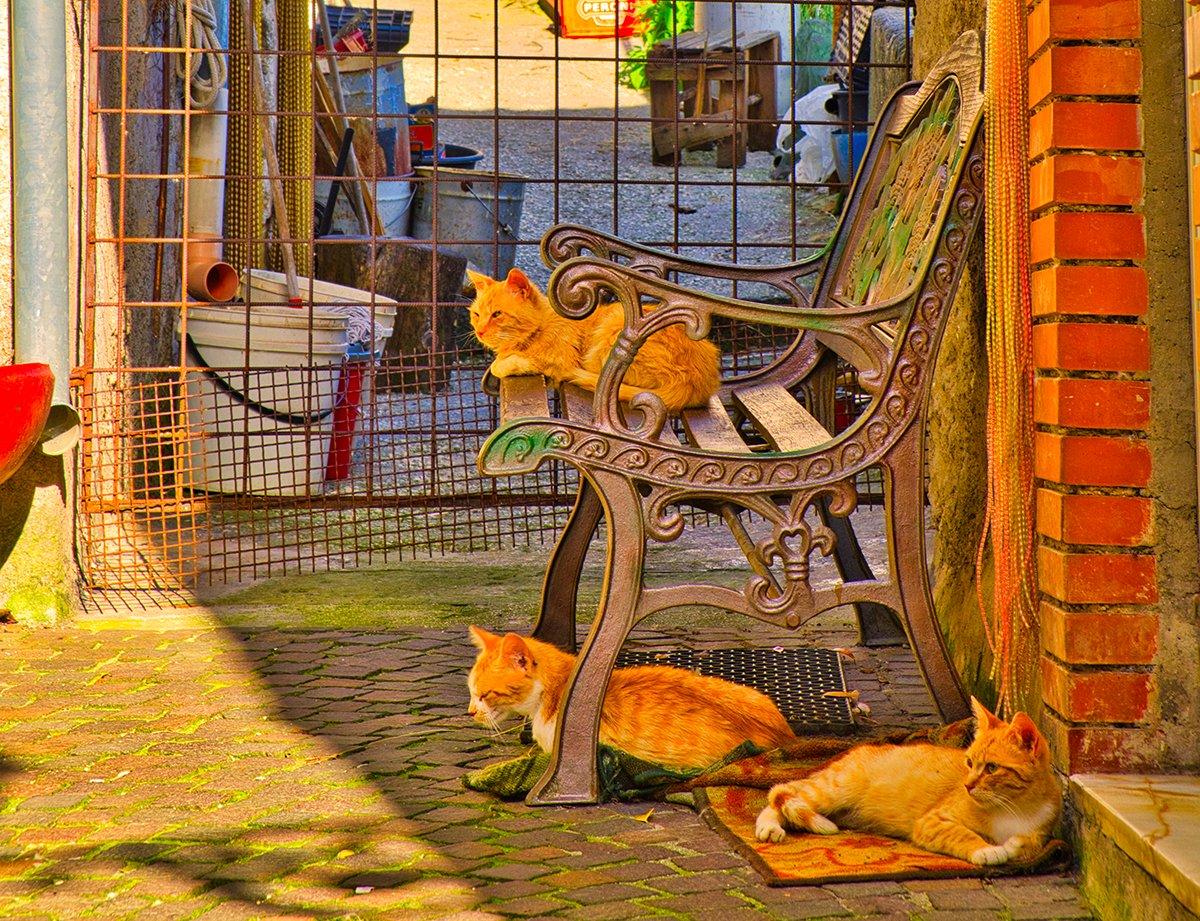 I gatti del borgo di Pesche